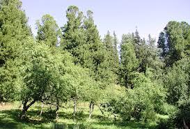 Органические удобрения:применение сидератов