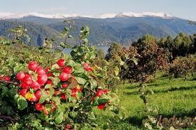 Органические удобрения:обогащение компостов