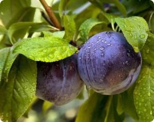 Как вырастить качественные овощи