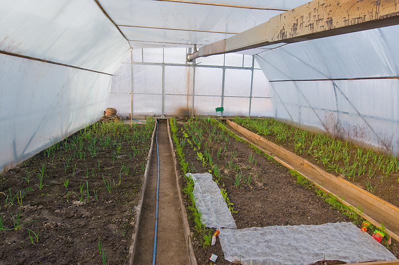 Род теплицы для выращивания овощей плодов и ранней зелени 38