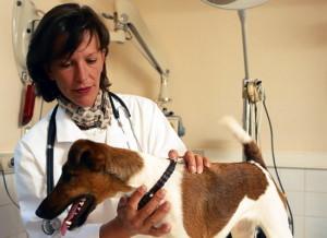 на ветеринарные услуги