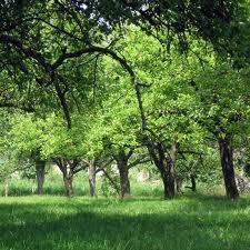 Органические удобрения:чем обогащает почву навоз