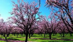 Органические удобрения:когда удобрять навозом сад