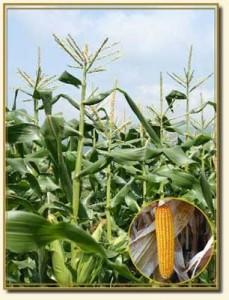 полив и удобрение растения