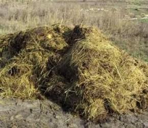 Органические удобрения:удобрение навозом
