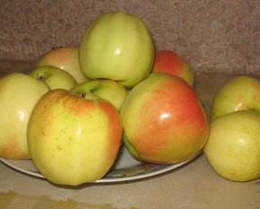 Кальвиль снежный:характеристика плодов