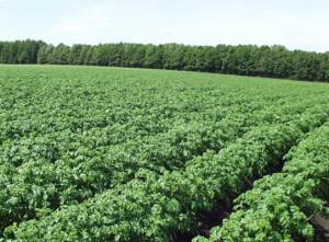 Обработка земли: принципы органического земледелия
