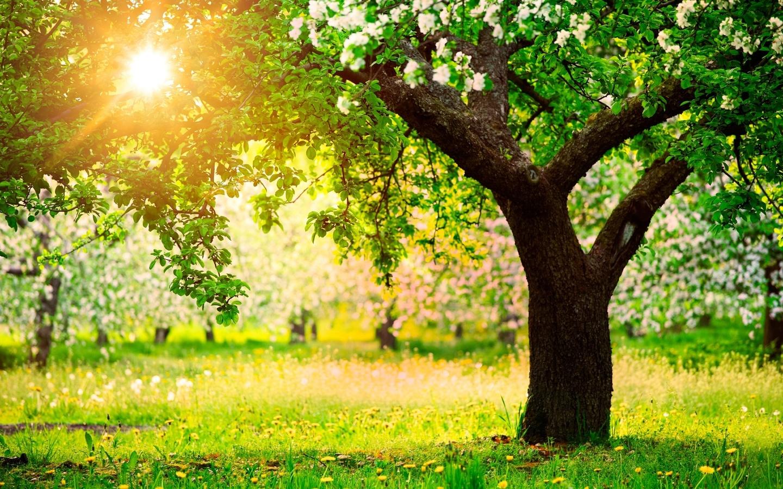 Хотите иметь яблоневый сад у себя за