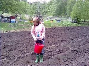 Важно вовремя посадить семена в землю