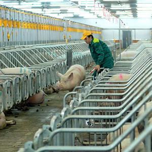 Развитие животноводства в сельской местности
