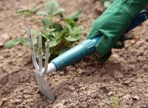 Определяем кислотность почвы с помощью лакмусовой бумаги