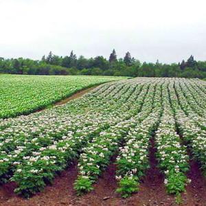 Как обрабатывать землю  на принципах органического  земледелия