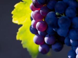 Сажаем виноград