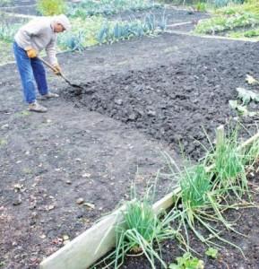 Перекапывание почвы удобряет ваш участок