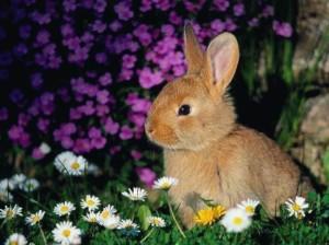Фестал для кроликов