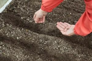 Какие растения не растут на кислой почве