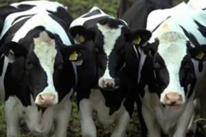 Где пасти коров жителям  Трофимовки