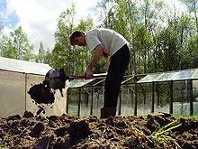 Как перекапывать почву на зиму