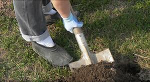 Как определить кислотность почвы в домашних условиях?