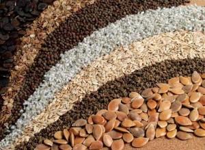Как купить хорошие семена : советы специалиста