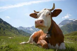 Соль для скота