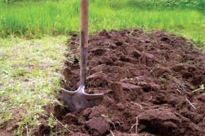 Окапываем деревья и кусты