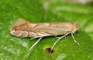 меры борьбы с насекомыми