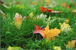 Стоит ли верить в прогнозы на осень