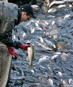 Что нужно для открытия бизнеса  по рыболовству:советы юриста