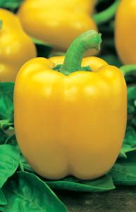 Оранжевые сорта сладкого перца