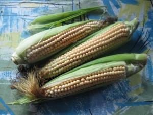 Полезные свойства красной кукурузы