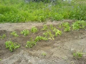 органическое землиделие