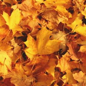 Куда девать листья