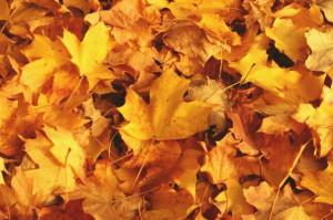 Почему опасно сжигать опавшие листья