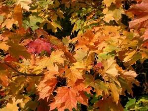 Как сделать компост из опавших осенних листьев