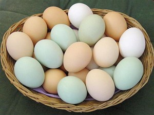 Почему куры стали нести яйца без скорлупы?