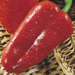 Раннеспелые сорта сладкого перца: