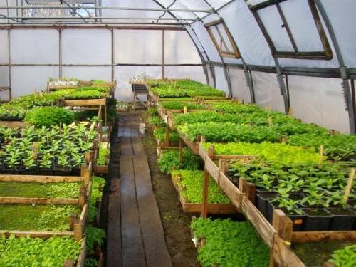 методы выращивания овощей