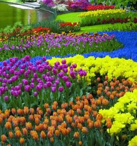 Главное назначение цветника
