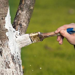 Как защитить деревья от грызунов?