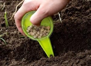 Когда производить подзимний посев