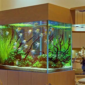 Как ухаживать за аквариумом дома?