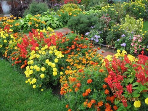 доращивать рассаду цветов