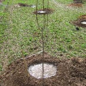 Как завести сад в неподходящих условиях?