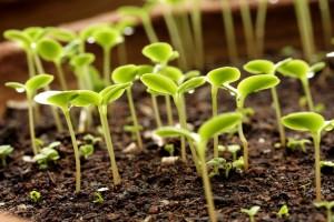Что дальше нужно  огурцам для выращивания