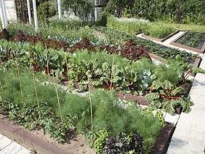 Можно ли загущать посадки растений на грядке