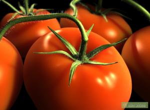 Лечебное действие томата