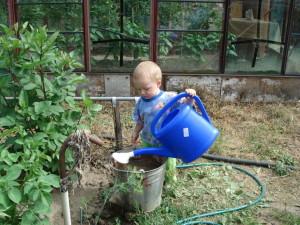 Как поливать капусту осенью