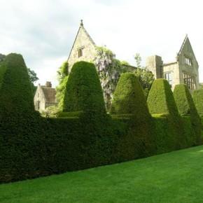 Декоративный забор круглый год:сажаем  вечнозеленые кустарники и деревья