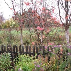 Дачный участок:закладываем гумус до весны